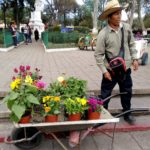 San-Cristobal-Blumen