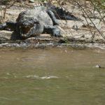Sumidero-Krokodil