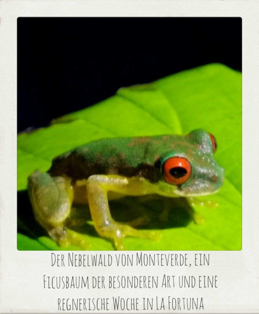 Monteverde-Ficus-La-Fortuna