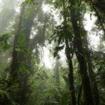 Monteverde-Nebelwald-Ausblick