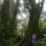 Monteverde-Nebelwald-Baum-Theresa