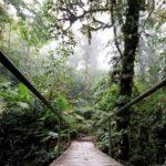 Monteverde-Nebelwald-Bruecke