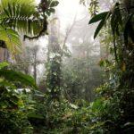 Monteverde-Nebelwald-Nebel