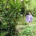 Monteverde-Nebelwald-Theresa