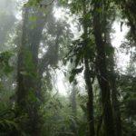 Monteverde-Nebelwald-grün