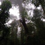 Monteverde-Nebelwald-nach-oben