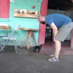 Ometepe-Katze