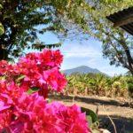 Ometepe-Madera-Blumen