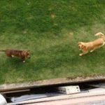 Boquete-Hunde