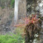 Boquete-Pipeline-Trail-Blume