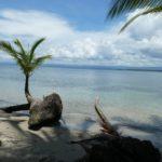 Colon-Drago-Beach-Palme