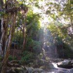 Minca_Lianen_Wasserfall