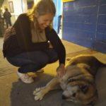 Salento_Strassenhunde