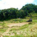 Toraja_Aussicht_Reisterrassen