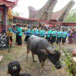 Toraja_Beerdigung_Bueffel