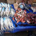 Toraja_Markt_Fisch