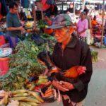 Toraja_Markt_Gockel