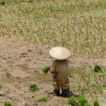 Toraja_Menschen_Reisbauer