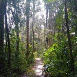 Cameron_Highlands_Hike_Wald
