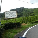 Cameron_Highlands_Horn