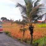 Bali_Canggu_Bulli