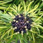 Bali_Ubud_Pflanze