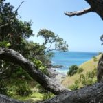 Fletcher_Bay_Coastal_Walk_Baum