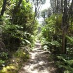 Fletcher_Bay_Coastal_Walk_Weg_Wald