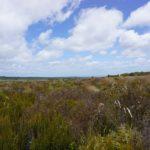 Tongariro_Gras