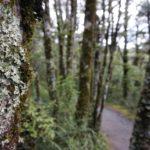 Tongariro_Staemme